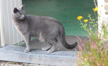 lees meer over onze Katten